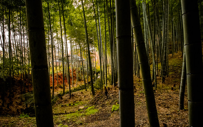 desktop background image of a gully in the Arashiyama Bamboo Forest, Kyoto Japan  --  Gully with some buildings of the Tenryuji Temple on the other side  --  Arashiyama Bamboo Forest (嵐山竹やぶ)  --  Copyright 2012 Jeffrey Friedl, http://regex.info/blog/  --  This photo is licensed to the public under the Creative Commons Attribution-NonCommercial 3.0 Unported License http://creativecommons.org/licenses/by-nc/3.0/ (non-commercial use is freely allowed if proper attribution is given, including a link back to this page on http://regex.info/ when used online)
