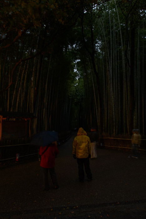 Dusk with a glow from a sign light off to the left  --  Arashiyama Bamboo Forest (嵐山竹やぶ)  --  Kyoto, Japan  --  Copyright 2012 Jeffrey Friedl, http://regex.info/blog/  --  This photo is licensed to the public under the Creative Commons Attribution-NonCommercial 3.0 Unported License http://creativecommons.org/licenses/by-nc/3.0/ (non-commercial use is freely allowed if proper attribution is given, including a link back to this page on http://regex.info/ when used online)