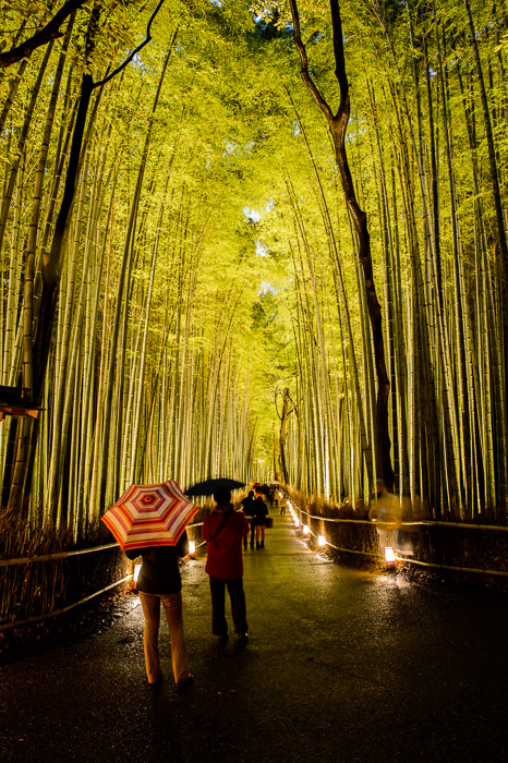 Slow Start soon the crowds would be teeming  --  Arashiyama Bamboo Forest (嵐山竹やぶ)  --  Kyoto, Japan  --  Copyright 2012 Jeffrey Friedl, http://regex.info/blog/  --  This photo is licensed to the public under the Creative Commons Attribution-NonCommercial 3.0 Unported License http://creativecommons.org/licenses/by-nc/3.0/ (non-commercial use is freely allowed if proper attribution is given, including a link back to this page on http://regex.info/ when used online)