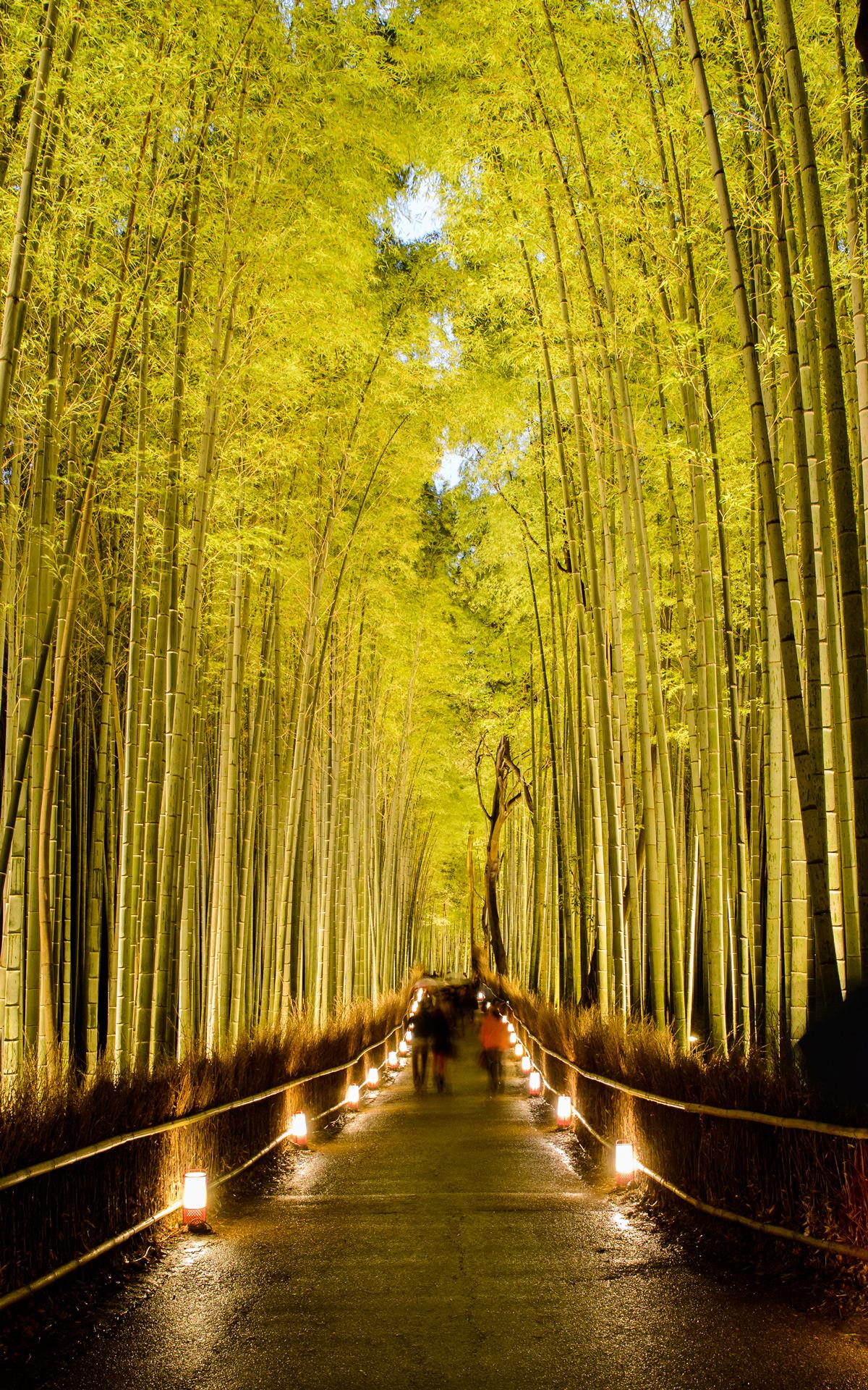 Jeffrey Friedl's Blog » Kyoto Arashiyama Bamboo Forest ...