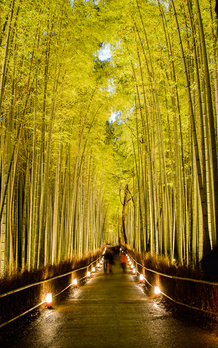 desktop background image of the Arashiyama Bamboo Forest (Kyoto Japan) lit up at night  --  Last Respite for the next few hours  --  Arashiyama Bamboo Forest (嵐山竹やぶ)  --  Copyright 2012 Jeffrey Friedl, http://regex.info/blog/  --  This photo is licensed to the public under the Creative Commons Attribution-NonCommercial 3.0 Unported License http://creativecommons.org/licenses/by-nc/3.0/ (non-commercial use is freely allowed if proper attribution is given, including a link back to this page on http://regex.info/ when used online)
