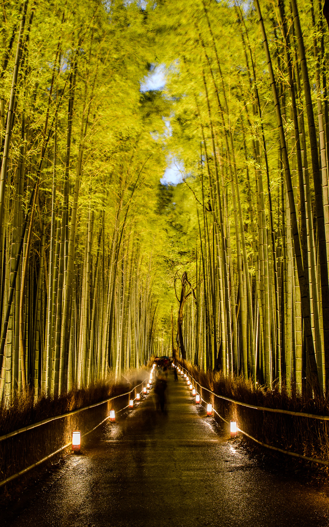 Jeffrey Friedls Blog » Kyoto Arashiyama Bamboo Forest Lightup