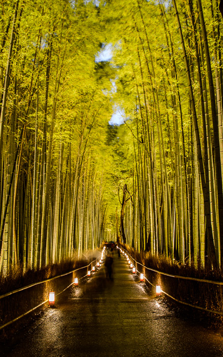 Cold, Crowded, and Cliché — six second exposure to get moving people to fade away — Arashiyama Bamboo Forest Lightup, Kyoto Japan 京都・嵐山竹やぶ花灯路  --  Arashiyama Bamboo Forest (嵐山竹やぶ)  --  Copyright 2012 Jeffrey Friedl, http://regex.info/blog/  --  This photo is licensed to the public under the Creative Commons Attribution-NonCommercial 3.0 Unported License http://creativecommons.org/licenses/by-nc/3.0/ (non-commercial use is freely allowed if proper attribution is given, including a link back to this page on http://regex.info/ when used online)