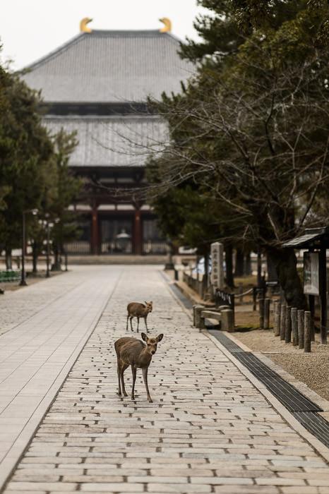 Locals -- Todaiji (東大寺) -- Nara, Japan -- Copyright 2012 Jeffrey Friedl, http://regex.info/blog/