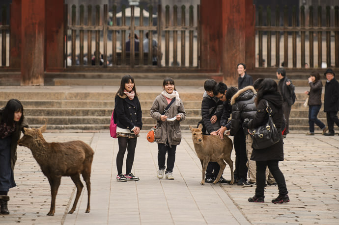 Untamed if they were tamed, they'd be giving the deer food -- Todaiji (東大寺) -- Nara, Japan -- Copyright 2012 Jeffrey Friedl, http://regex.info/blog/