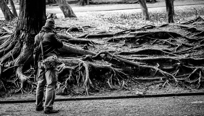 Exposed Root System I didn't even notice their photographic potential until he pointed them out  --  Todaiji (東大寺)  --  Nara, Japan  --  Copyright 2012 Jeffrey Friedl, http://regex.info/blog/