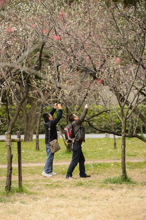 Common Sight -- Kyoto Imperial Palace Park () -- Kyoto, Japan -- Copyright 2013 Jeffrey Friedl, http://regex.info/blog/ -- This photo is licensed to the public under the Creative Commons Attribution-NonCommercial 3.0 Unported License http://creativecommons.org/licenses/by-nc/3.0/ (non-commercial use is freely allowed if proper attribution is given, including a link back to this page on http://regex.info/ when used online)