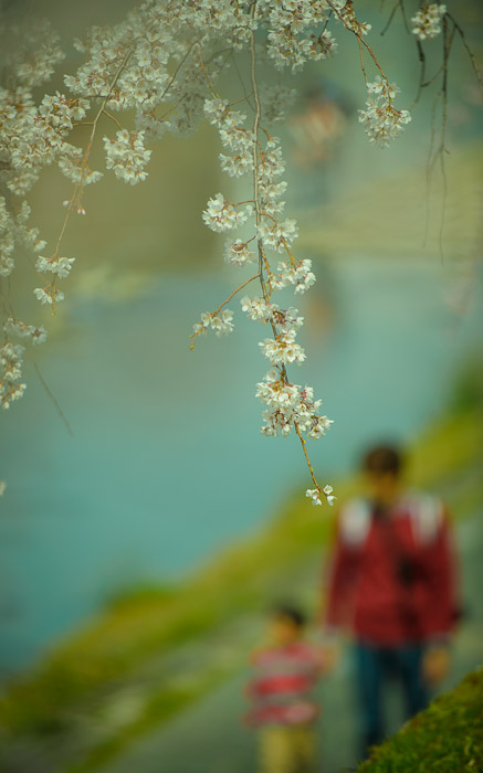 desktop background image of a dad and young child taking a stroll along a river under cherry blossoms, in Kyoto Japan -- Quality Time -- Copyright 2013 Jeffrey Friedl, http://regex.info/blog/ -- This photo is licensed to the public under the Creative Commons Attributio