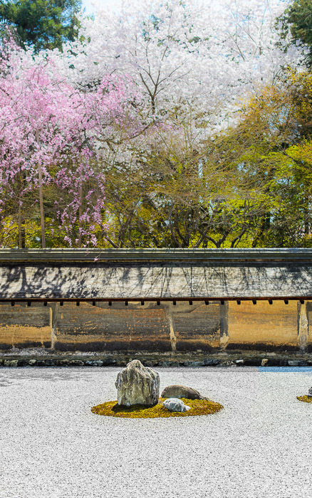 desktop background image of the rock garden at the Ryouanji Temple (龍安寺), Kyoto Japan, during cherry blossom season -- Ryoanji's Famous Rock Garden Ryouanji Temple (龍安寺) -- Ryouanji Temple (龍安寺) -- Copyright 2013 Jeffrey Friedl, http://regex.info/blog/ -- This photo is licensed to the public under the Creative Commons Attribution-NonCommercial 4.0 International License http://creativecommons.org/licenses/by-nc/4.0/ (non-commercial use is freely allowed if proper attribution is given, including a link back to this page on http://regex.info/ when used online)