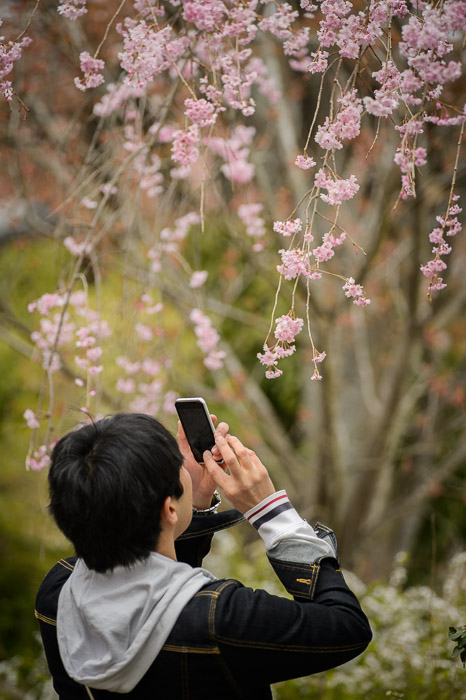 Smartphone Clutch -- The Haradanien Garden (原谷苑) -- Kyoto, Japan -- Copyright 2013 Jeffrey Friedl, http://regex.info/blog/ -- This photo is licensed to the public under the Creative Commons Attribution-NonCommercial 3.0 Unported License http://creativecommons.org/licenses/by-nc/3.0/ (non-commercial use is freely allowed if proper attribution is given, including a link back to this page on http://regex.info/ when used online)