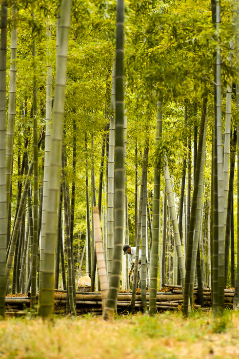 Bamboo Farmer Bamboo Farm, Kyoto Japan — Apr 2013 -- Copyright 2013 Jeffrey Friedl, http://regex.info/blog/ -- This photo is licensed to the public under the Creative Commons Attribution-NonCommercial 4.0 International License http://creativecommons.org/licenses/by-nc/4.0/ (non-commercial use is freely allowed if proper attribution is given, including a link back to this page on http://regex.info/ when used online)
