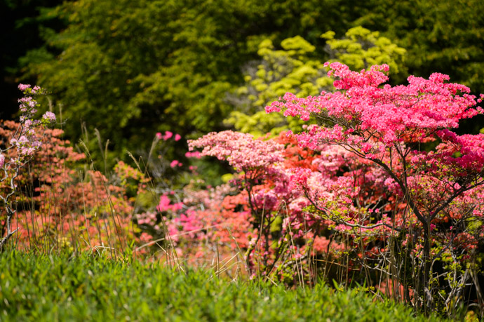 Many Shades -- Mt. Hiei (比叡山) -- Kyoto, Japan -- Copyright 2013 Jeffrey Friedl, http://regex.info/blog/ -- This photo is licensed to the public under the Creative Commons Attribution-NonCommercial 3.0 Unported License http://creativecommons.org/licenses/by-nc/3.0/ (non-commercial use is freely allowed if proper attribution is given, including a link back to this page on http://regex.info/ when used online)