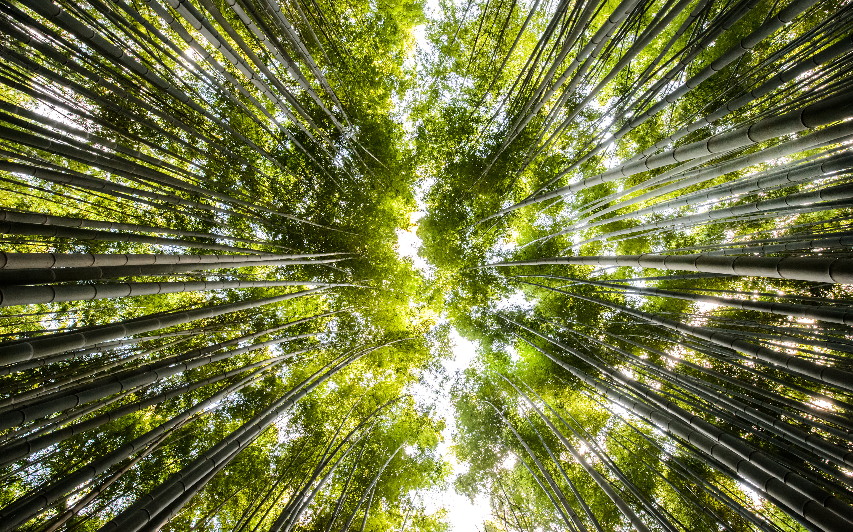 Jeffrey Friedl S Blog 187 Canopy Of Bamboo
