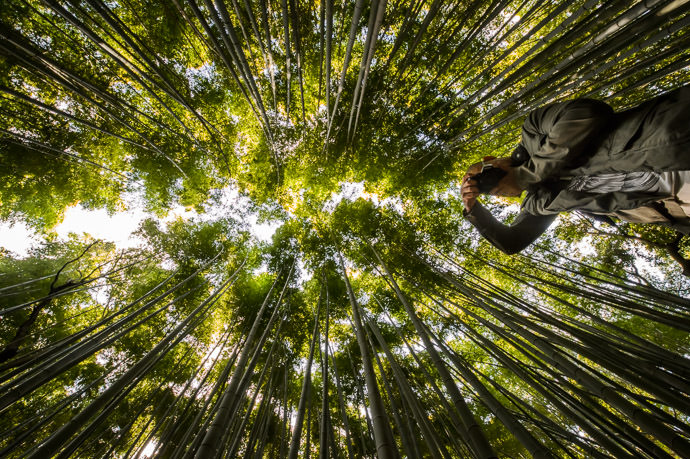 Either Or Either Aeron is really tall, or I'm really short. ( or I'm lying on my back on the ground, as I sometimes do to get the shot ) -- Arashiyama Bamboo Forest (嵐山竹やぶ) -- Kyoto, Japan -- Copyright 2013 Jeffrey Friedl, http://regex.info/blog/