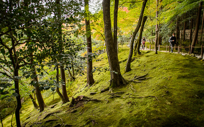 desktop background image of a slope of rich moss at the Silver Pavilion, Kyoto Japan (銀閣寺) -- Mossy Slope -- Ginkakuji Temple (銀閣寺) -- Copyright 2013 Jeffrey Friedl, http://regex.info/blog/