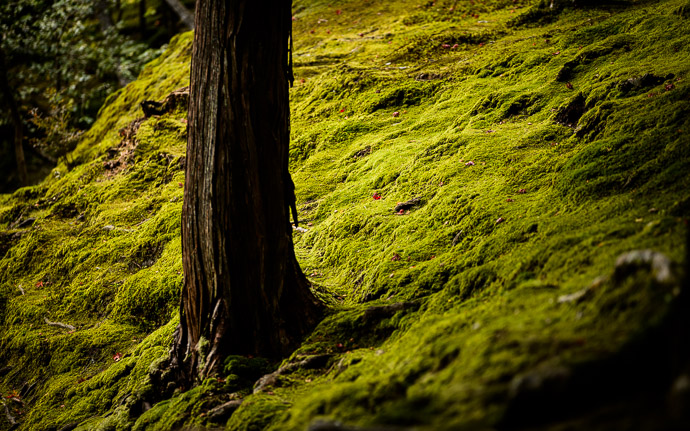desktop background image of lush moss at the Ginkakuji Temple (銀閣寺), Kyoto Japan -- Lush Moss at the Ginkakuji Temple (銀閣寺) -- Ginkakuji Temple (銀閣寺) -- Copyright 2013 Jeffrey Friedl, http://regex.info/blog/