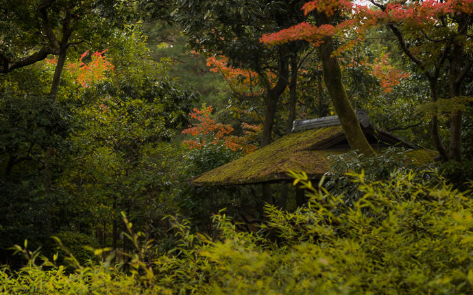 a Japanese garden gate's roof at the Seifuso Villa (清風荘), Kyoto Japan