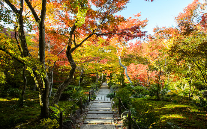 desktop background image of the main path bathed in fall colors, at the Hokyo-in Temple (宝筐院), Kyoto Japan -- Hokyo-in Temple (宝筐院) -- Copyright 2013 Jeffrey Friedl, http://regex.info/blog/ -- This photo is licensed to the public under the Creative Commons Attribution-NonCommercial 3.0 Unported License http://creativecommons.org/licenses/by-nc/3.0/ (non-commercial use is freely allowed if proper attribution is given, including a link back to this page on http://regex.info/ when used online)