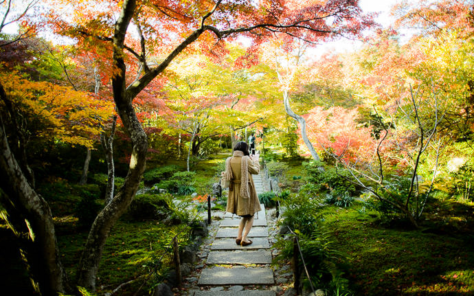 "desktop background image of the main path bathed in fall colors, at the Hokyo-in Temple (宝筐院), Kyoto Japan -- Richer "" 3D "" Feel (I wish I'd made a wigglegram of this exact scene!) -- Hokyo-in Temple (宝筐院) -- Copyright 2013 Jeffrey Friedl, http://regex.info/blog/ -- This photo is licensed to the public under the Creative Commons Attribution-NonCommercial 3.0 Unported License http://creativecommons.org/licenses/by-nc/3.0/ (non-commercial use is freely allowed if proper attribution is given, including a link back to this page on http://regex.info/ when used online)"