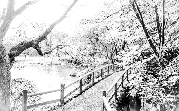 a styalized B&W view of an autumn scene at the Sento Imperial Palace (仙洞御所), Kyoto Japan