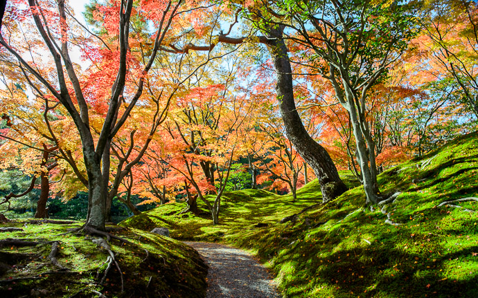 desktop background image of a fall-foliage sceen at the Sento Imperial Palace (仙洞御所), Kyoto Japan -- Palatial Path a path at a palace, the Sento Imperial Palace in Kyoto Japan Nov 2013 仙洞御所(京都市)去年の秋 -- Sento Imperial Palace (仙洞御所) -- Copyright 2013 Jeffrey Friedl, http://regex.info/blog/2014-09-22/2460 -- This photo is licensed to the public under the Creative Commons Attribution-NonCommercial 4.0 International License http://creativecommons.org/licenses/by-nc/4.0/ (non-commercial use is freely allowed if proper attribution is given, including a link back to this page on http://regex.info/ when used online)