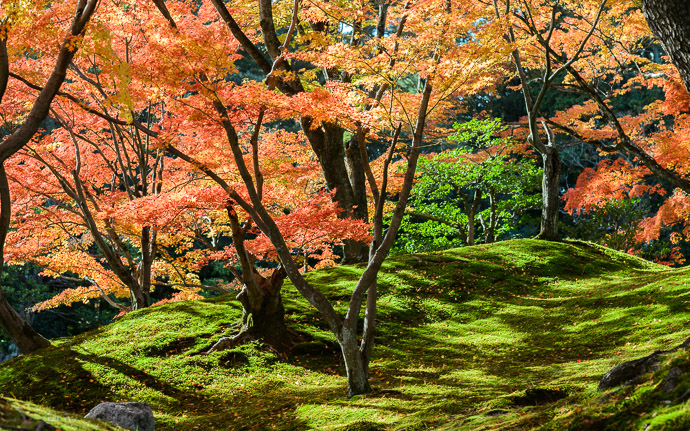 desktop background image of a fall-foliage sceen at the Sento Imperial Palace (仙洞御所), Kyoto Japan -- Lazy Hillside -- Sento Imperial Palace (仙洞御所) -- Copyright 2013 Jeffrey Friedl, http://regex.info/blog/2014-09-22/2460 -- This photo is licensed to the public under the Creative Commons Attribution-NonCommercial 4.0 International License http://creativecommons.org/licenses/by-nc/4.0/ (non-commercial use is freely allowed if proper attribution is given, including a link back to this page on http://regex.info/ when used online)