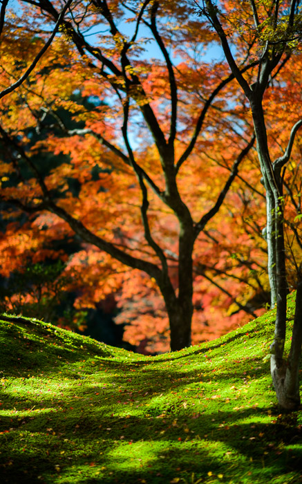 desktop background image of a fall-foliage sceen at the Sento Imperial Palace (仙洞御所), Kyoto Japan -- Inviting as a bed for a nap -- Sento Imperial Palace (仙洞御所) -- Copyright 2013 Jeffrey Friedl, http://regex.info/blog/2014-09-22/2460 -- This photo is licensed to the public under the Creative Commons Attribution-NonCommercial 4.0 International License http://creativecommons.org/licenses/by-nc/4.0/ (non-commercial use is freely allowed if proper attribution is given, including a link back to this page on http://regex.info/ when used online)