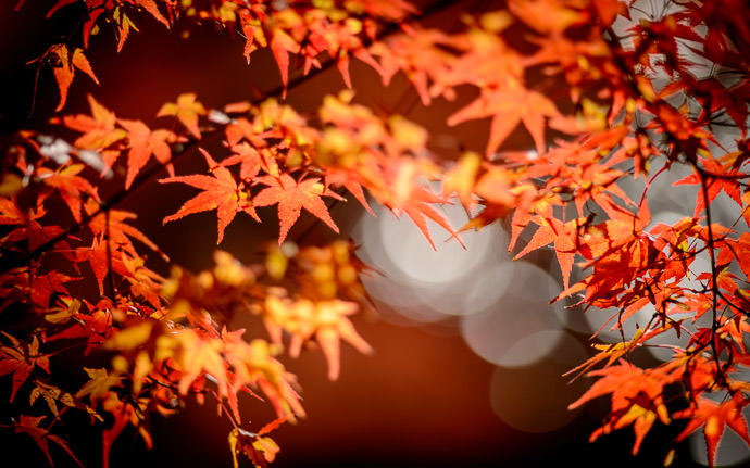desktop background image of a fall-foliage scene at the Enkoji Temple (円光寺), Kyoto Japan -- Moody at the Enkoji Temple (円光寺) -- Enkoji Temple (円光寺) -- Copyright 2013 Jeffrey Friedl, http://regex.info/blog/