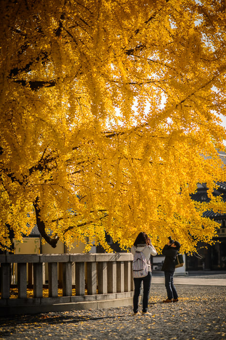 Picture I took of some chick taking a pic of some guy taking a pic of some leaves. (at the Nishi Hongwanji Temple (西本願寺), Kyoto Japan) -- Nishi Hongwanji Temple (西本願寺) -- Copyright 2013 Jeffrey Friedl, http://regex.info/blog/ -- This photo is licensed to the public under the Creative Commons Attribution-NonCommercial 4.0 International License http://creativecommons.org/licenses/by-nc/4.0/ (non-commercial use is freely allowed if proper attribution is given, including a link back to this page on http://regex.info/ when used online)