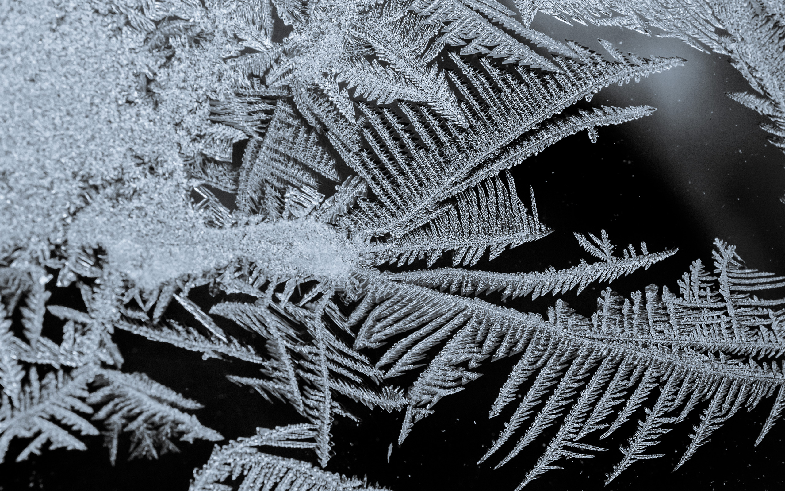 Jeffrey Friedl S Blog 187 More Frost Patterns From Arctic Ohio