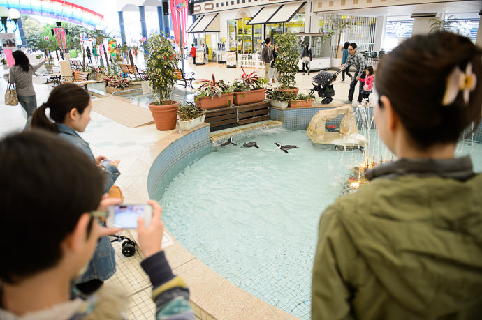 Penguins in what feels like a mall fountain ペンギンたち -- Adventure World -- Shirahama, Wakayama, Japan -- Copyright 2014 Jeffrey Friedl, http://regex.info/blog/