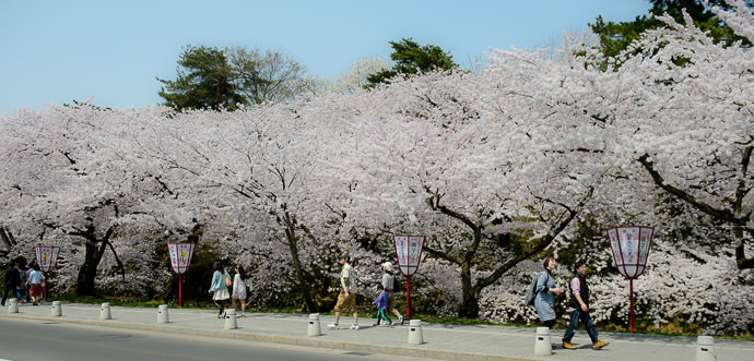 Late-April Cherry Blossoms Hirosaki Park (弘前公園), Aomori Japan -- Hirosaki Park (弘前公園) -- Hirosaki, Aomori, Japan -- Copyright 2014 Jeffrey Friedl, http://regex.info/blog/