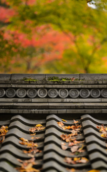 desktop background image of fall-foliage temple-architecture detail at the Kosanji (Kozanji) Temple (高山寺), Kyoto Japan -- Gate Roof Detail -- Kosanji (Kozanji) Temple (高山寺) -- Copyright 2014 Jeffrey Friedl, http://regex.info/blog/ -- This photo is licensed to the public under the Creative Commons Attribution-NonCommercial 4.0 International License http://creativecommons.org/licenses/by-nc/4.0/ (non-commercial use is freely allowed if proper attribution is given, including a link back to this page on http://regex.info/ when used online)