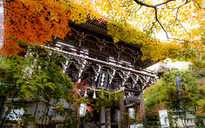 a fall-foliage scene at the Yoshiminedera Temple (善峯寺のもみじ), Kyoto Japan