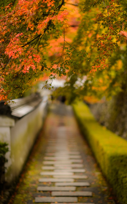 desktop background image of a fall-foliage scene at the Yoshiminedera Temple (善峯寺), Kyoto Japan -- Picturesque Path at the Yoshiminedera Temple (善峯寺) Kyoto, Japan -- Yoshiminedera Temple (善峯寺) -- Copyright 2014 Jeffrey Friedl, http://regex.info/blog/2014-11-18/2485 -- This photo is licensed to the public under the Creative Commons Attribution-NonCommercial 4.0 International License http://creativecommons.org/licenses/by-nc/4.0/ (non-commercial use is freely allowed if proper attribution is given, including a link back to this page on http://regex.info/ when used online)