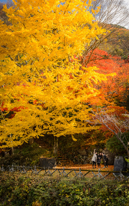 desktop background image of three college students taking a selfie among the colorful fall folage near the Rurikoin Temple (瑠璃光院の近く) in Kyoto Japan -- Copyright 2014 Jeffrey Friedl, http://regex.info/blog/