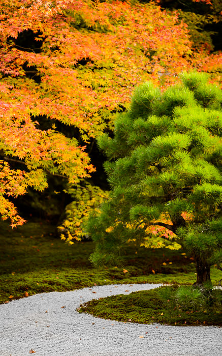 desktop background image of a garden scene at the Tenjuan Temple (天授庵), Kyoto Japan -- Tenjuan Temple (天授庵) -- Copyright 2015 Jeffrey Friedl, http://regex.info/blog/ -- This photo is licensed to the public under the Creative Commons Attribution-NonCommercial 4.0 International License http://creativecommons.org/licenses/by-nc/4.0/ (non-commercial use is freely allowed if proper attribution is given, including a link back to this page on http://regex.info/ when used online)