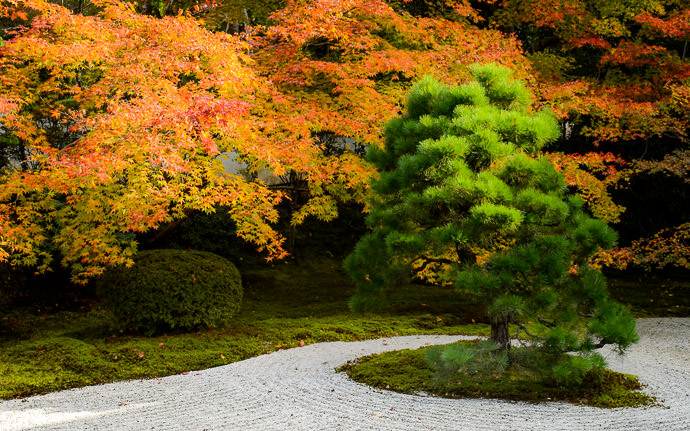 desktop background image of a garden scene at the Tenjuan Temple (天授庵), Kyoto Japan -- Rock Garden with fairly subdued colors 天授庵の岩石庭園 -- Tenjuan Temple (天授庵) -- Copyright 2015 Jeffrey Friedl, http://regex.info/blog/ -- This photo is licensed to the public under the Creative Commons Attribution-NonCommercial 4.0 International License http://creativecommons.org/licenses/by-nc/4.0/ (non-commercial use is freely allowed if proper attribution is given, including a link back to this page on http://regex.info/ when used online)