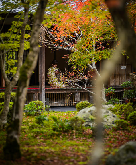 Chimping -- Enkoji Temple (円光寺) -- Kyoto, Japan -- Copyright 2015 Jeffrey Friedl, http://regex.info/blog/