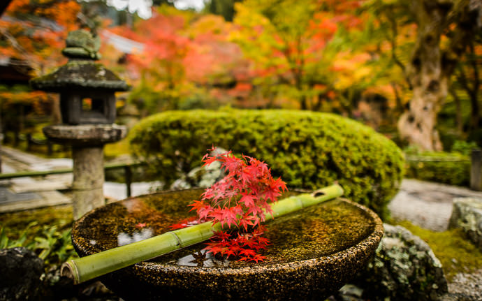 desktop background image of a fall-foliage scene in Kyoto, Japan -- at the Enkoji Temple (円光寺) -- Enkoji Temple (円光寺) -- Copyright 2015 Jeffrey Friedl, http://regex.info/blog/