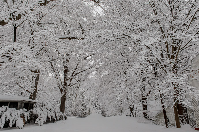 Heavy every branch, down to the smallest twig, has its own deep layer of snow -- Rootstown, Ohio, United States -- Copyright 2016 Jeffrey Friedl, http://regex.info/blog/