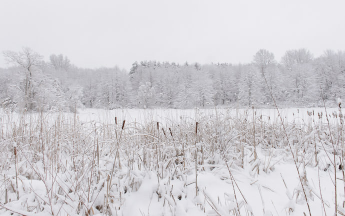desktop background image of a winter scene at a small lake -- Just A Few Days Ago the lake behind my folks' place in Rootstown Ohio -- Rootstown, Ohio, United States -- Copyright 2016 Jeffrey Friedl, http://regex.info/blog/