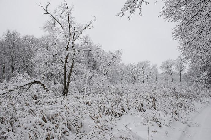 Frosty Swamp -- Rootstown, Ohio, United States -- Copyright 2016 Jeffrey Friedl, http://regex.info/blog/