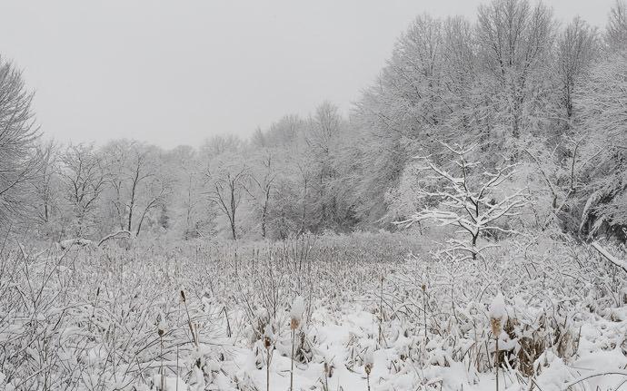 Frigid Wilderness -- Rootstown, Ohio, United States -- Copyright 2016 Jeffrey Friedl, http://regex.info/blog/