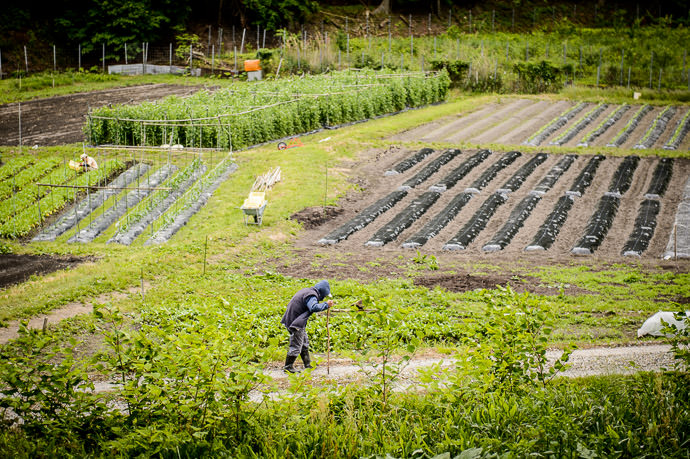 Honest Life's Work farmer deep in the mountains of northern Kyoto, Japan -- Shikobuchi Shrine (思子淵神社) -- Copyright 2016 Jeffrey Friedl, http://regex.info/blog/ -- This photo is licensed to the public under the Creative Commons Attribution-NonCommercial 4.0 International License http://creativecommons.org/licenses/by-nc/4.0/ (non-commercial use is freely allowed if proper attribution is given, including a link back to this page on http://regex.info/ when used online)
