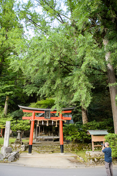 Uncharacteristically Green Iwato Ochiba Shrine (岩戸落葉神社) -- Iwato Ochiba Shrine (岩戸落葉神社) -- Kyoto, Japan -- Copyright 2016 Jeffrey Friedl, http://regex.info/blog/