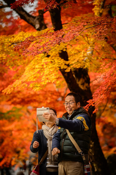 Compose and Shoot Last Thursday the 17th, at the Eigenji Temple, Shiga Japan 滋賀県の永源寺、先週の17日 -- Eigenji Temple (永源寺) -- Higashiomi, Shiga, Japan -- Copyright 2016 Jeffrey Friedl, http://regex.info/blog/