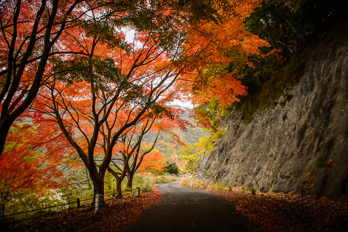 A Beautiful, Peacful Place where I've been trying to imagine myself lately ( a deserted road near this place ) -- Higashiomi, Shiga, Japan -- Copyright 2016 Jeffrey Friedl, http://regex.info/blog/