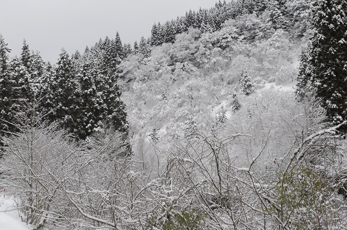 Still Frosty -- Otsu, Shiga, Japan -- Copyright 2017 Jeffrey Friedl, http://regex.info/blog/ -- This photo is licensed to the public under the Creative Commons Attribution-NonCommercial 4.0 International License http://creativecommons.org/licenses/by-nc/4.0/ (non-commercial use is freely allowed if proper attribution is given, including a link back to this page on http://regex.info/ when used online)