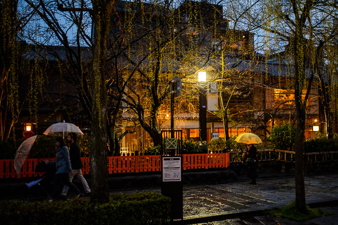 Weeping Cherry about to bloom -- Kyoto, Japan -- Copyright Jeffrey Friedl +1 408-257-9513, http://regex.info/blog/ -- Jeffrey Friedl +1 408-257-9513